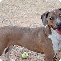 Adopt A Pet :: Legion - Sierra Vista, AZ