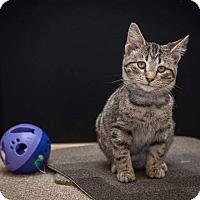 Adopt A Pet :: Ryder - Madionsville, KY
