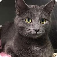 Adopt A Pet :: Rogue - Monroe, MI