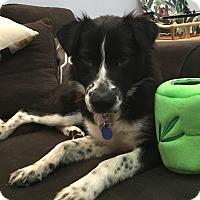 Adopt A Pet :: ALLY (Courtesy List) - San Pedro, CA