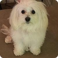 Adopt A Pet :: Bitsy - Thousand Oaks, CA