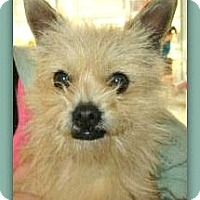 Adopt A Pet :: Theo - Boulder, CO