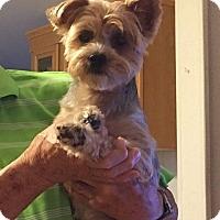 Adopt A Pet :: CandyCane - Ocala, FL