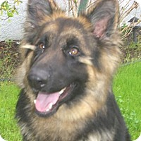 Adopt A Pet :: Brooke - Canoga Park, CA