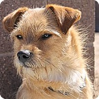 Adopt A Pet :: Newton - Fountain, CO