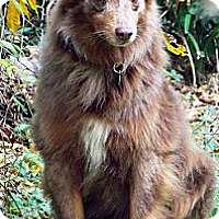 Adopt A Pet :: Dixon - PENDING - Savannah, GA