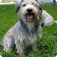 Adopt A Pet :: Zoie - Baton Rouge, LA