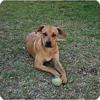 Adopt A Pet :: Roadie - Orlando, FL