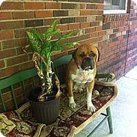 Adopt A Pet :: Dixie - Hazard, KY