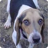 Adopt A Pet :: Jenny Crowe - Waldorf, MD