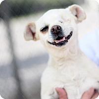 Adopt A Pet :: Mallory - Fresno, CA