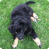 Adopt A Pet :: Deja - Phoenix, AZ