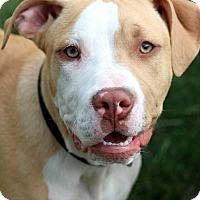 Adopt A Pet :: Bass - Eastpointe, MI