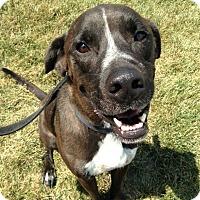 Adopt A Pet :: Ripley - De Soto, MO