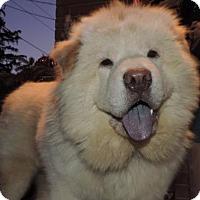 Adopt A Pet :: Nicholas **adopted* - Prescott, ON