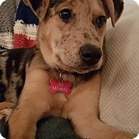 Adopt A Pet :: Keeper - Grafton, WI