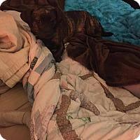 Adopt A Pet :: Breezy - Roanoke, VA