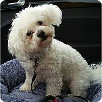 Adopt A Pet :: Emmy Lou - Salem, OR