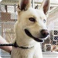 Adopt A Pet :: Robin Hood - Lincolnton, NC