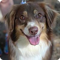 Adopt A Pet :: Winnifred - Austin, TX