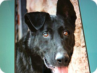German Shepherd Dog Dog for adoption in Los Angeles, California - KING VON KIEFER
