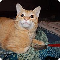 Adopt A Pet :: Butterscotch - Clarksville, TN
