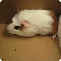 Adopt A Pet :: *ELSA - Norco, CA