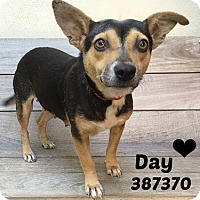 Adopt A Pet :: 387370 Day - San Antonio, TX
