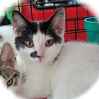 Adopt A Pet :: Trooper - Fort Wayne, IN