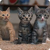 Adopt A Pet :: Cary, Grant, Gidget - Staten Island, NY