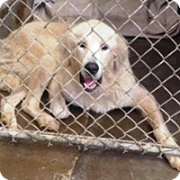Adopt A Pet :: Hocus - Oswego, IL