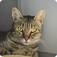 Adopt A Pet :: Geri - Gardnerville, NV