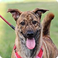 Adopt A Pet :: Mina - San Francisco, CA