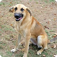 Adopt A Pet :: Dolly Madison - Brownsboro, AL