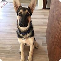 Adopt A Pet :: Lana - Mira Loma, CA