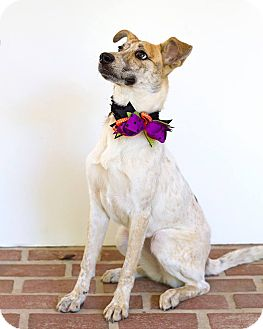 Cattle Dog Mix Dog for adoption in Baton Rouge, Louisiana - Willow