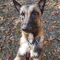 Adopt A Pet :: Ollie - Louisville, KY