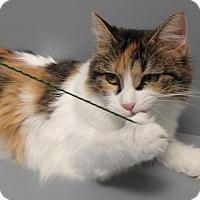 Adopt A Pet :: Precious - Seguin, TX