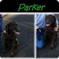 Adopt A Pet :: Parker - Deer Park, NY