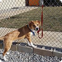 Adopt A Pet :: Oso - St John, IN