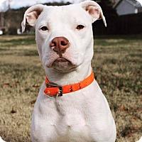 Adopt A Pet :: Oakley - Dayton, OH