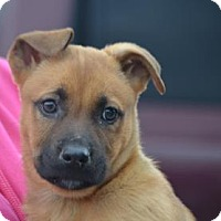 Adopt A Pet :: Cherry - Chester Springs, PA
