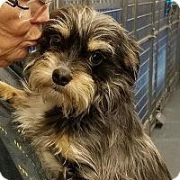Adopt A Pet :: Milo - Sparta, NJ