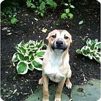 Adopt A Pet :: Winter - Alexandria, VA