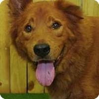 Adopt A Pet :: Sparticus - Inverness, FL