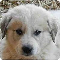 Adopt A Pet :: Jose - Staunton, VA