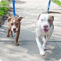 Adopt A Pet :: Frank - Reisterstown, MD
