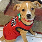 Adopt A Pet :: Tallahassee