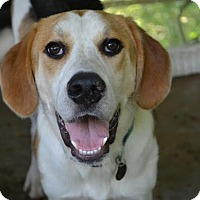 Adopt A Pet :: Biggs - Hagerstown, MD