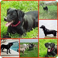 Adopt A Pet :: STONE - Davenport, FL